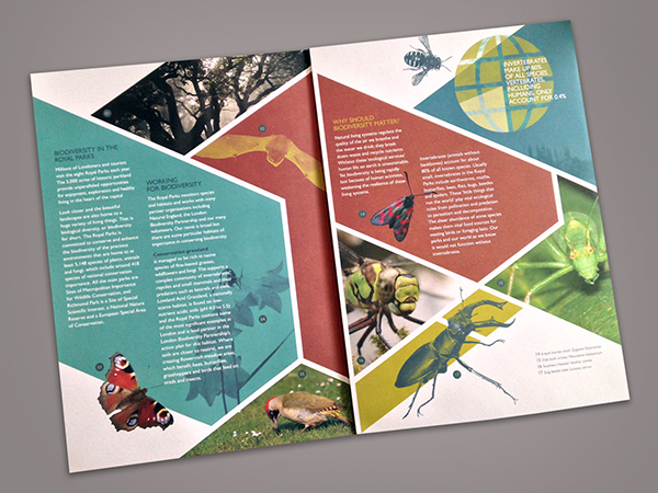 thiet-ke-brochure-design-57